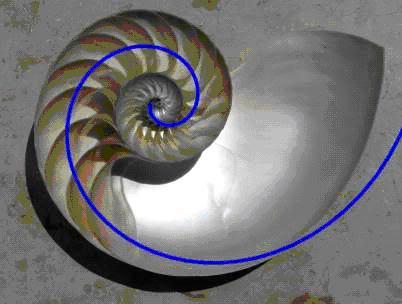 Vỏ ốc có kết cấu xoắn ốc
