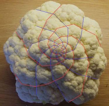 Đường xoắn ốc logarit ở cây cải xúp lơ