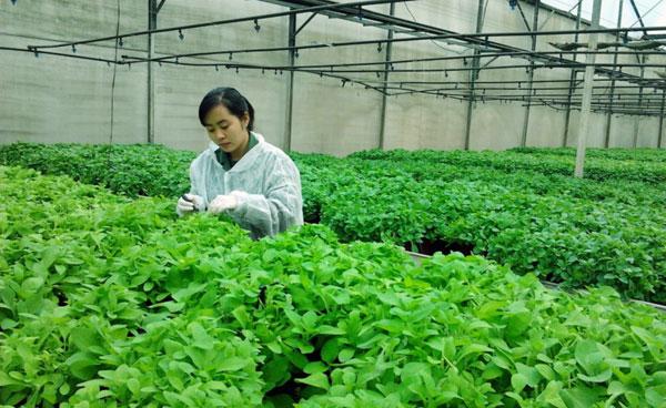 Nghề kỹ sư nông nghiệp