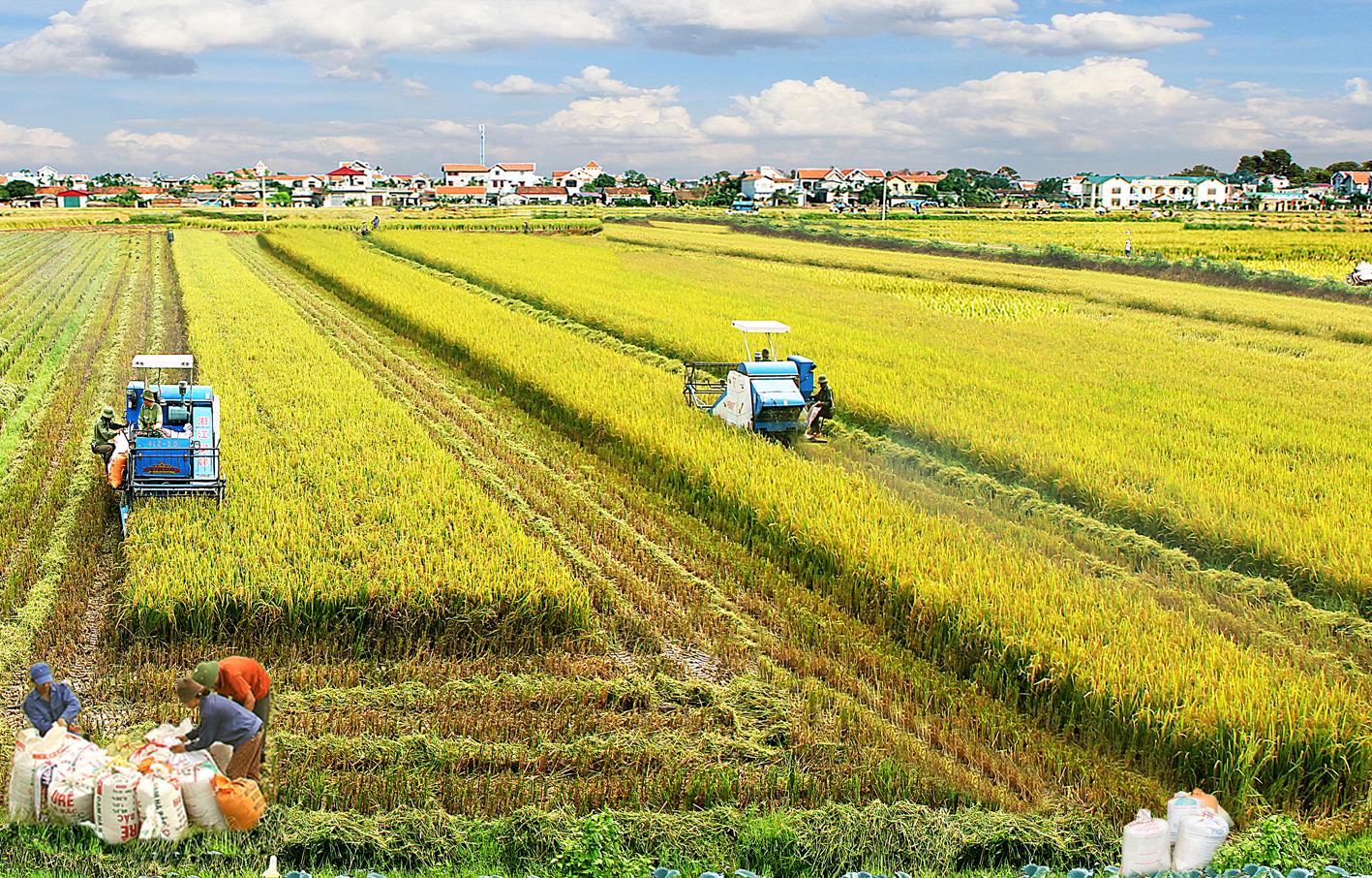 Nghề phát triển nông thôn
