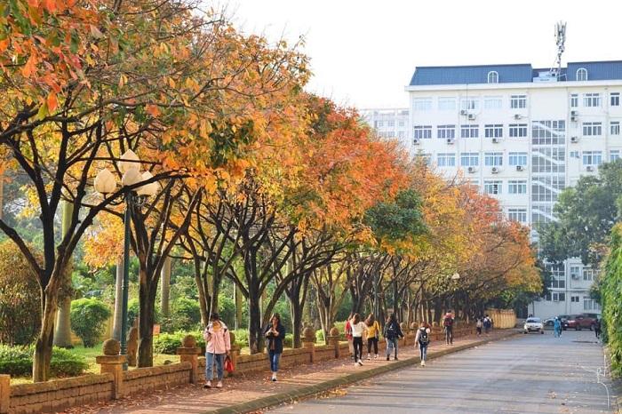 Con đường tình yêu trong khuôn viên đại học Sư phạm Hà Nội